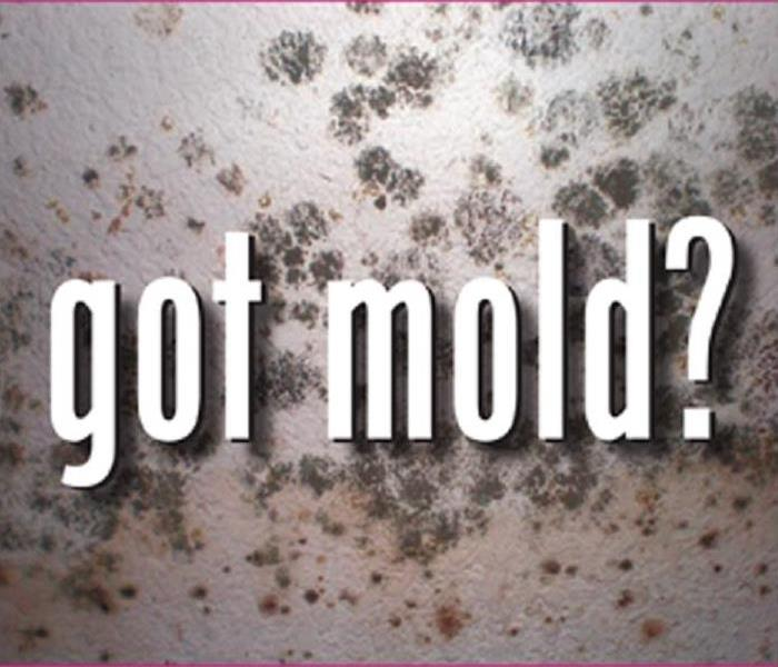 Mold Remediation Does Your Home Have a Mold Problem