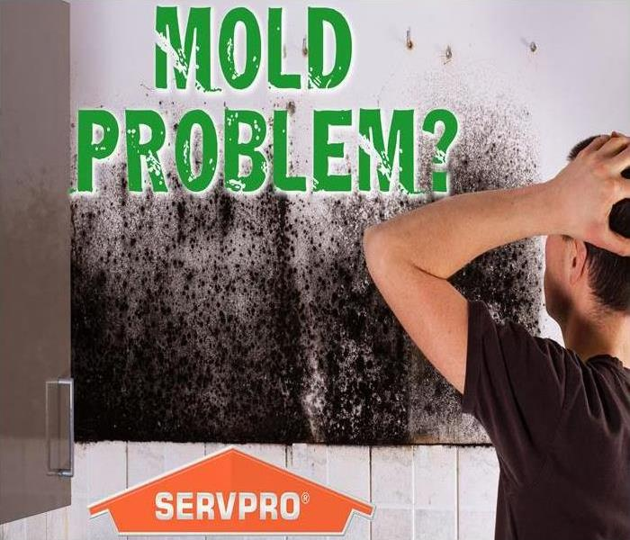 Mold Remediation Conditions Might Be Right For Mold